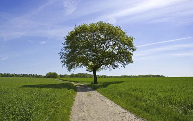 Картинки по запросу ծառեր